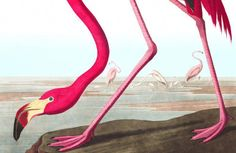 Brighten up any space with this lovely Pink Flamingo Wallpaper mural. Its vibrant design is a J. Audubon illustration, making it unique and original. World Map Wallpaper, How To Hang Wallpaper, Normal Wallpaper, Forest Wallpaper, Photo Wallpaper, Bathroom Wallpaper, Flamingo Rosa, Flamingo Print, Pink Flamingos