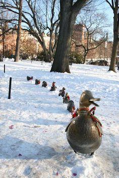 Make Way for Ducklings, Boston Public Gardens