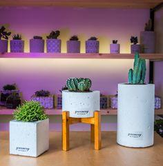 Concrete pots with succulents and cactus! #greenery #greeneryartofplants #cactus #succulents #plants #concrete #chania #crete