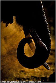 Elephant, ol Donyo, Kenya