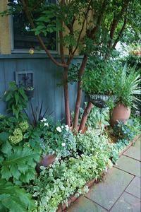 makes a small side area feel cozy Small Space Gardening, Small Gardens, Outdoor Plants, Outdoor Gardens, Narrow Garden, Patio Interior, Shade Plants, Shade Garden, Garden Styles