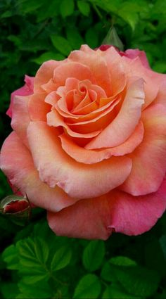 Different types of flowers with names, meanings and types of flowers with pictures Pretty Flower Names, Beautiful Rose Flowers, Pretty Roses, Flowers Nature, Exotic Flowers, Amazing Flowers, Beautiful Flowers, Beautiful Beautiful, Tea Roses