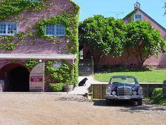 Waiheke Stonyridge Vineyard NZ - love the car and plate Waiheke Island, New Zealand, Wines, Vineyard, To Go, Plate, Explore, Adventure, Canning