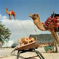 Martin Parr, Jerusalem. Wooden camel statues and camel rides. 1995.