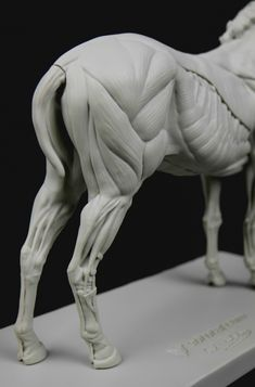 Anatomy: Equine figure in 2019 Anatomy Drawing, Anatomy Art, Drawing Art, Horse Sculpture, Animal Sculptures, Horse Drawings, Animal Drawings, Horse Anatomy, Animal Anatomy