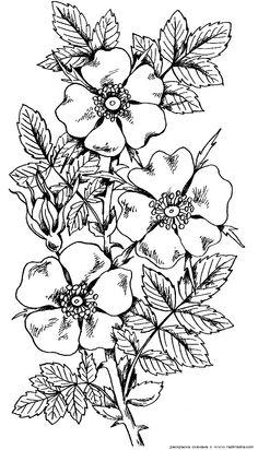 Färben von Blumen, Pflanzen, Natur, Kinder-Druck & raquo; Seite 7
