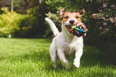 Deixe seu cão livre do estresse e do tédio