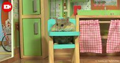 No te pierdas el tour de la nueva casa de Chicken el hámster http://mascotas.mercola.com/sitios/mascotas/archivo/2016/12/07/tour-de-casa-hamster.aspx