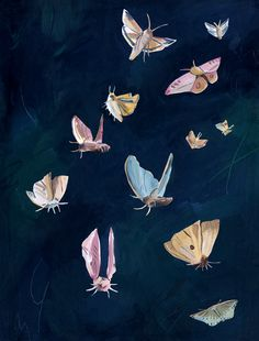 Moths for the night-time themed issue of Another Escape by Grace Helmer Art And Illustration, Butterfly Illustration, Nature Illustrations, Animal Drawings, Art Drawings, Moth Drawing, Time Art, Pretty Art, Collage Art