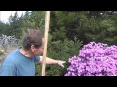 How To Prune Grapes - Back To Eden Garden - L2Survive with Thatnub - YouTube