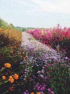 a filed of wild flowers, colorful flowers in a field, yellow orange pink purple wild flowers field,