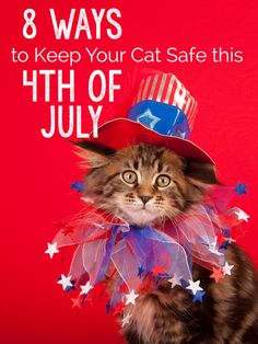 With 4th of July right around the corner, many of us are planning parties and celebrations with friends and family. However, Independence Day is an especially tough holiday for the four-legged furry members of our family.  In fact, more pets get lost on July 4th than any other day of the year. Check out these 8 tips to help your cat get through the holiday safely: