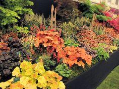 Flowering Shade Garden Ideas: A Heuchera for Everyone