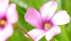 Flowers - Simonmarshall's Gallery - Gallery - Lumix G Experience