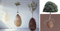 Organic burial pods: The Capsula Mundi project by designers Anna Citelli and Raoul Bretzel has developed an organic, biodegradable burial capsule that will turn the deceased's body into nutrients for a tree that will grow out of their remains. Funeral, Transformers, When I Die, Back To Nature, Coffin, Biodegradable Products, First Love, Projects To Try, Creative