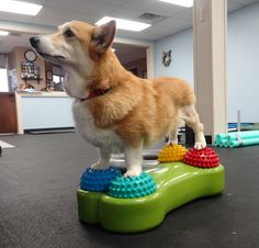 Acupunture In Ontario For Dogs