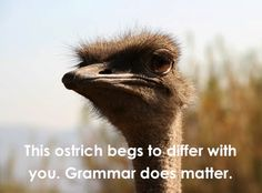 This ostrich begs to differ with you.  Grammar does matter.