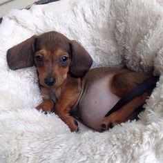 That puppy belly!