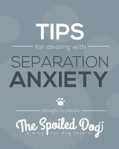 Tips for Dealing with Separation Anxiety in Dogs #doganxietymedication