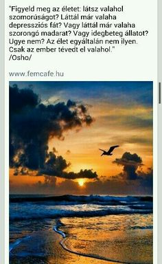 ... Osho, So True, Teaching, Humor, Motivation, Mantra, World, Happy, Nature