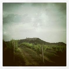 Vineyards at sunset in the countryside of #Todi #Umbria