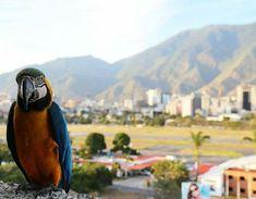 Feliz inicio de semana! Fotografía cortesía de @teresitacc #LaCuadraU #GaleriaLCU #Caracas #CaracasUnica #CaracasHermosa #CaracasBella