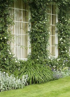 I'm presently in need of a garden view like this: West Woodhay House, Hampshire, UK. Dream Garden, Home And Garden, Garden Living, Landscape Design, Garden Design, White Gardens, My Secret Garden, Plant Wall, Garden Spaces