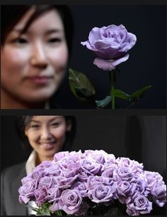 Named 'Applause', the rose has been genetically modified to synthesize delphinidin, a pigment that's found in most blue flowers. Researchers worked for 20 years to create the BLUE ROSE. It sells for ten times the price of an ordinary rose.