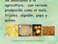 Los Diaguitas Quinoa, Frijoles, Agriculture, Projects