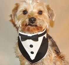 Little Dog Wedding Tuxedo Collar Formal Bandana Tuxedo Collar Pet Bandanna Formal Wear on Etsy, $32.00