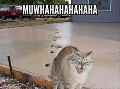 .........this made me crack up!  Only a cat could be this evil (but loveable!)