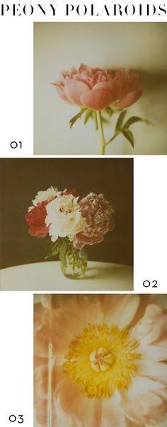 lingered upon: polaroid