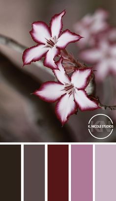 35 ideas wedding colors schemes fall colour palettes 35 Ideen Hochzeit Farbschemata f Fall Color Schemes, Color Schemes Colour Palettes, Fall Color Palette, Colour Pallette, Color Palate, Wedding Color Schemes, Color Combinations, Wedding Colors, Fall Paint Colors