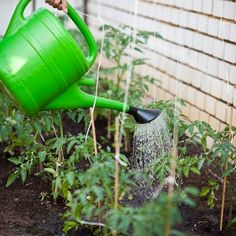 Tips for gardening in extreme heat.