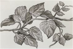 For access to Clare's online portfolio, please get in. Cool Art Drawings, Pencil Art Drawings, Realistic Drawings, Art Sketches, Leaf Drawing, Painting & Drawing, Graphite Drawings, Floral Illustrations, Drawing Techniques