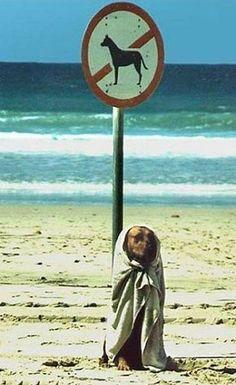 No Dog allowed