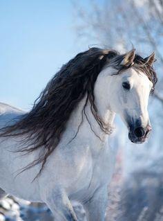 Magnificent Horses - Beautiful Coloring