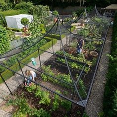 Our Peak Roof Heavy Duty Steel Decorative Fruit Cage has elevated fruit growing to a higher echelon by seamlessly blending the strength and durability of our standard heavy duty walk-in steel fruit cages with the graceful sweeping lines of the unique peak Potager Garden, Veg Garden, Vegetable Garden Design, Fruit Garden, Edible Garden, Garden Beds, Vegetable Gardening, Container Gardening, Farm Gardens