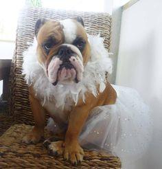 gorgeous bride :)