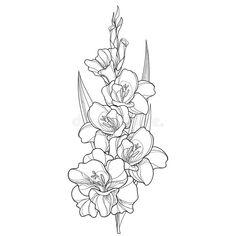 Flower Tattoo Stencils, Flower Tattoo Drawings, Tattoo Small, Tribal Flower Tattoos, Birth Flower Tattoos, Floral Tattoo Design, Flower Tattoo Designs, Gladiolus Flower Tattoos, Larkspur Tattoo