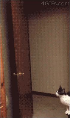 Impressive Ups. | The Best Cat GIF Post In The History Of Cat GIFs