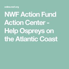 NWF Action Fund Action Center   -  Help Ospreys on the Atlantic Coast