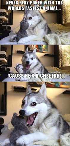 hahahaha this dog's face cracks me up!! | 17 Pun Dog Puns That Will Instantly Brighten Your Day