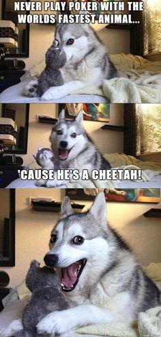 #meme #memes #pundog #pun #dog #funny #joke #animal