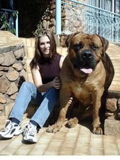 Guard Dog-His chinese street name is Ho Lee Schitt.