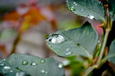 Teresa Fndz Photography: O reflexo na gota de chuva