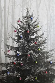 """22 Holiday Decor Hacks That'll Make You Say """"Why Didn't I Know About These Sooner?"""""""