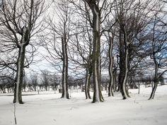 West Backhill of Lethenty: Garden in Winter | by blazing fruit