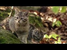 Wild Serbia Save Wildlife, European History, Wildlife Photography, Hungary, Habitats, Youtube, Animals, Animaux, Animal