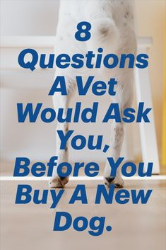 Thinking about getting a new dog or puppy? check out my questions Vets want people to ask themselves before getting a new dog. Quick Weight Loss Diet, Weight Loss Workout Plan, Easy Weight Loss Tips, Weight Loss Cleanse, Millionaire Lifestyle, Vet Questions, Health Advice, Pet Health, The Help